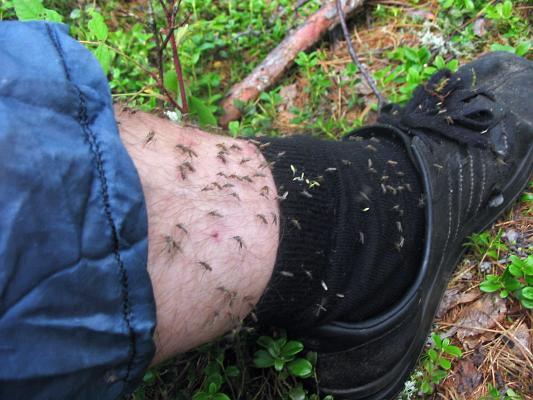 Средство от комаров и мошек своими руками для детей