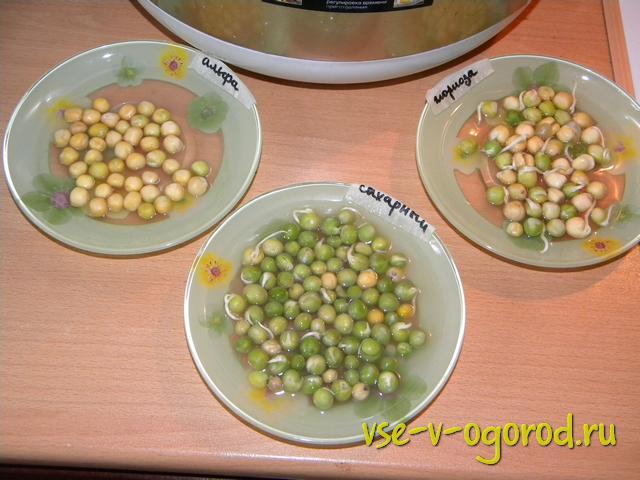 Проращивание замоченных семян