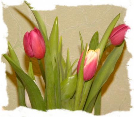 тюльпаны, с чем садить тюльпаны, украшаем огород