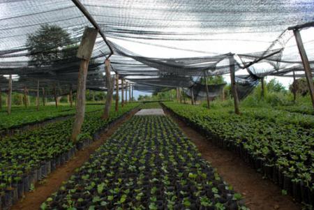 Когда выращивать рассаду в теплице 927