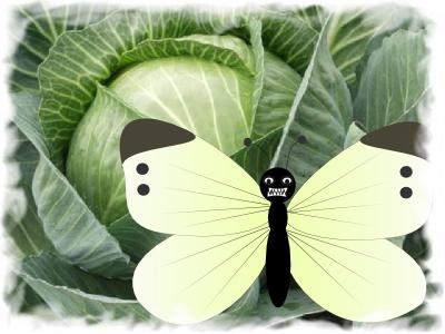 гусеницы бабочки, грядки от сорняков, капустная совка, листья капусты,крестоцветные блошки, гусеницы капустной моли, гусеницы белянки, капустная тля