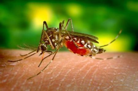 Как веб-мастеру бороться с комарами?