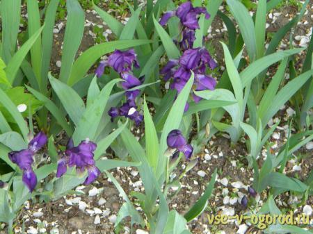 Цветы в саду и декорирование сада в